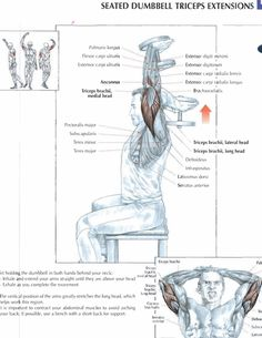 Seated Dumbbell Triceps Extensions #exercise #workout #routine #fitness