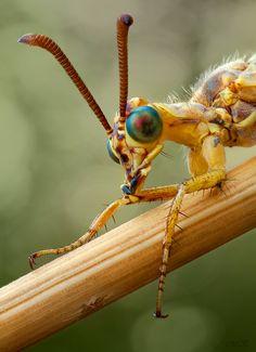 35PHOTO - Miron Karlinsky - Портрет муравьиного льва