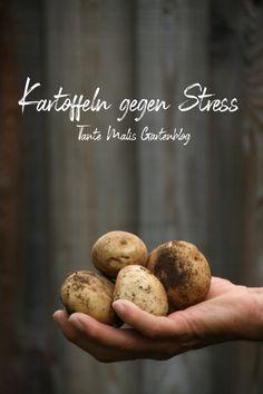 Kartoffeln gegen Stress #Gesundheit #Garten #Kartoffelernte #Gemüsegarten #gesundes essen Love Garden, Baked Potato, Baking, Fruit, Vegetables, Ethnic Recipes, Stress, Gardening, Food
