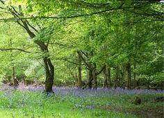 epping forest london Epping Forest, London, Landscape, Plants, Big Ben London, Landscape Paintings, Flora, Plant, Scenery