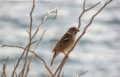 Ende Januar findet wieder der Big Garden Birdwatch in Großbritannien statt. Wie das Vogelzählen funktioniert, erfahren Sie in unserem Blogbeitrag.