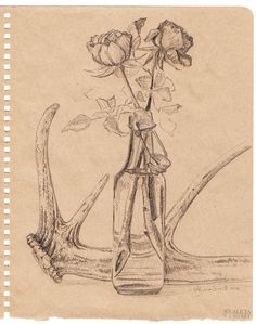 Antler and rose drawing by Alicia Sivertsson.