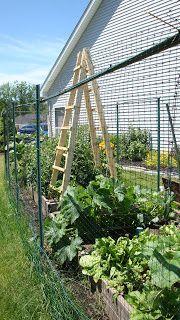 Nonnie's Nest cucumber ladder netting for deer, rabbits
