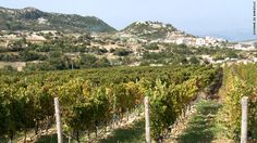 I have a special memory of a picnic and afternoon in a Vineyard in Lebanon