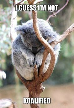 I want a Koalafication pleaseeeee