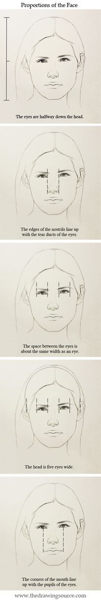 Five proportions of the face to use during your next portrait drawing!