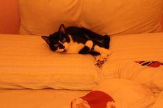 Minhoca, my cat :)