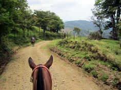 On the back roads, going to the Eden Falls in Monteverde Costa Rica. No better way to go then by horse!!