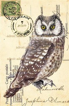 'Vintage Owl French Carte Postale' by Louis Adroit