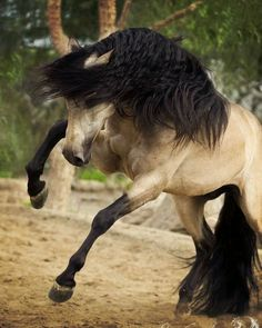 e ♞ collection nature animal cheval horse pferde horse caballo .e ♞ collection nature animal cheval horse pferde horse caballo . Most Beautiful Horses, Pretty Horses, Horse Love, Nature Animals, Animals And Pets, Cute Animals, Pretty Animals, Horse Pictures, Animal Pictures