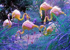 amazing, cute, fashion, flamingo, flamingos, girl, hair, photo, pink, rainbow