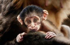 such a cute little monkey infant...