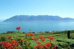 Lac Léman, Genfersee, Lavaux, St. Saphorin