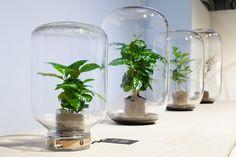 O projeto é de uma equipe de Amsterdam e visa trazer os benefícios das plantas para quem não tem talento ou tempo para os cuidados