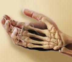 StudyJams! The Skeletal System
