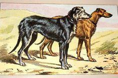 scottish deerhound -E. Landseer 1802-1873