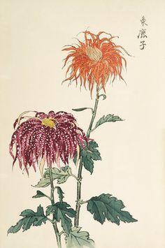 Chrysanthemum, Hasegawa, Keikwa (Author)