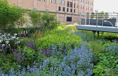 The Highline in NYC. One of the best ideas EVER!