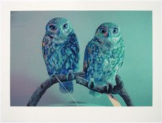Metamangament: John Pusateri works with layers of ink, coloured pencil and pastel over soft photographic images to craft vivid, almost hyper-real portraits of owls with an anthropomorphic effect which is at once haunting and whimsical. This allusion is he
