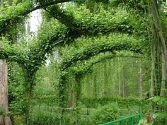ivy covered homes - Google Search