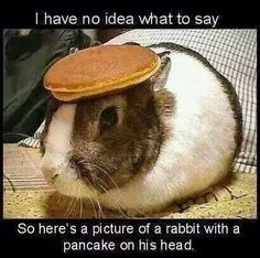a bunny with a pancake on it's head. My bunny pancakes is better though. Rabbit Pictures, Funny Animal Pictures, Funny Photos, Funny Animals, Cute Animals, Baby Animals, Animal Pics, Silly Pictures, Animal Captions