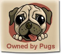 Owned by Pugs :: Lots of cute Pug photos :: www.ownedbypugs.com