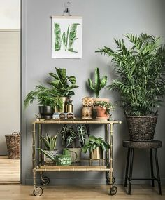 Home Decoration Handmade Four Amazing Benefits Of Keeping Indoor Potted Plants.Home Decoration Handmade Four Amazing Benefits Of Keeping Indoor Potted Plants Interior Plants, Interior Design, Plantas Indoor, Deco Nature, Decoration Plante, House Plants Decor, Green Plants, Indoor Plants, Potted Plants