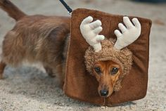 mounted antlers - Google Search