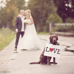 wedding dog love