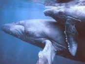 Disso Voce Sabia?: Marinha dos EUA matando milhares de baleias e golfinhos com Sonar & Weapons Testing