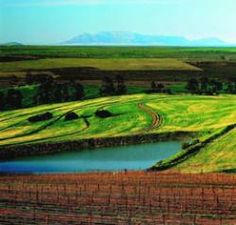 Everything you need to know about wine Out Of Africa, Need To Know, South Africa, Vineyard, Golf Courses, Wine, Vine Yard, Vineyard Vines