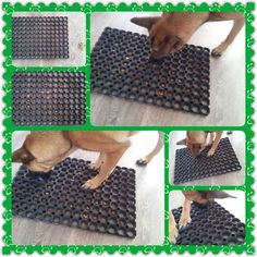 Plastic mat with holes put treat inside them and you got a dog toy :) - Dog Enrichment - Chien Brain Games For Dogs, Dog Games, Diy Dog Toys, Pet Toys, Pet Sitter, Dog Enrichment, Dog Puzzles, Puzzle Toys, Toy Puppies