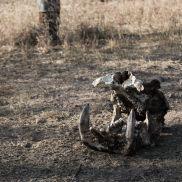 Tracking Instincts | krazywithtravel African Wild. Sabi Sand. Kruger National Park. Summit Lake, Spring Lake, Kruger National Park, African Safari, Narnia, Wildlife, Track, Runway, Track And Field