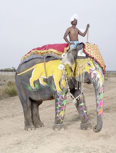 Beautiful photos of painted elephants by French photographer Charles Freger . The annual Elephant Festiv. Indian Elephant, Elephant Art, Jaipur, Rajasthan India, Charles Freger, Elephants Photos, Baby Elephants, World Photography, Beautiful Creatures