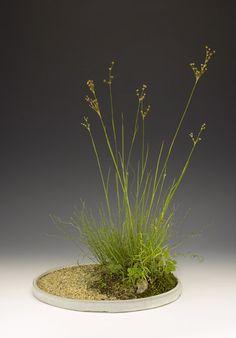 kusamono Ikebana, Garden Terrarium, Bonsai Garden, Indoor Bonsai Tree, Indoor Plants, Moss Garden, Garden Pots, Plant Design, Garden Design