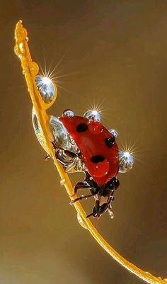 Lady bug -So beautiful!Great example of an amazing macro shot and ladybird are a great subject! Macro Photography, Animal Photography, Amazing Photography, Photography Settings, Wildlife Photography, Photography Ideas, Fashion Photography, Beautiful Bugs, Amazing Nature