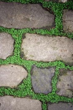 How to Plant Between Flagstone