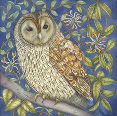 'Tawny Owl in the Honeysuckle'
