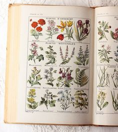 botanical books open on the tables for decorations Vintage Botanical Prints, Botanical Drawings, Botanical Art, Merian, Fauna, Natural History, Illustration Art, Book Illustrations, Wild Flowers