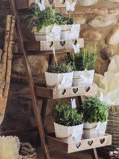 Piantine aromatiche piantate in box bianchi elegantissimi decorazioni per la tua casa.