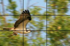 Image result for rule of thirds pics