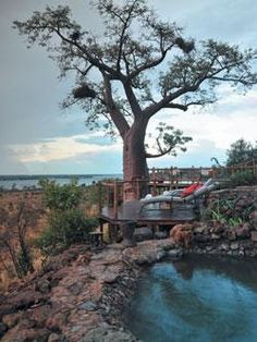Experience incredible game drives when you travel to Ngoma Safari Lodge in Botswana. This Chobe National Park luxury lodge is nestled on the banks of the Chobe River. National Park Lodges, Chobe National Park, National Parks, African Countries, African Safari, East Africa, Traveling By Yourself, Travel Destinations, Around The Worlds