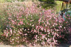Powell Gardens' Blog: September 2010