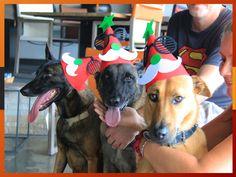 Our Furry Team @ Homeless Furniture would like to wish all our Customers & Friends a Merry Christmas & Happy New Year! We are open through the holidays except 1st January 2019 so see you :D  สุขสันต์ วันคริสมาสต์ และสวัสดีปีใหม่ ขออวยพรให้ลูกค้าทุกท่านมีแต่ความสุข🎉🎉🎉🎉🎉🎄🎁🎉😻 ร้านปิดวันที่ 1 มกราคม ๒๕๖๒ แต่จะเปิดให้บริการในช่วงวันหยุด แล้วพบกันนะคะ  We speak #English / #ภาษาไทย / #国语 / #Svenska / #Dansk / #Italiano / #Suomi / #Français / #Español / #廣東話