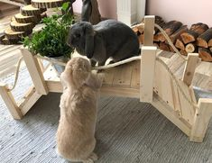 How to make an awesome bunny enclosure! Read more. Best rabbit cages, homes,. Indoor Rabbit House, Rabbit Hutch Indoor, House Rabbit, Pet Rabbit, Rabbit Pen, Indoor Rabbit Cages, Rabbit Shop, Diy Bunny Cage, Diy Bunny Toys