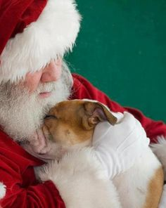 Santa Loves Pitties!