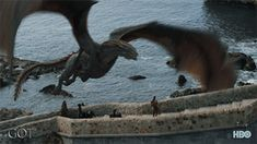Drogon Game Of Thrones, Watch Game Of Thrones, Game Of Thrones Facts, Game Of Thrones Dragons, Got Dragons, Game Of Thrones Quotes, Game Of Thrones Funny, Mother Of Dragons, Fantasy Creatures