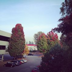 Leaving work... I love the changing leaves - @allaboutthecozy- #webstagram