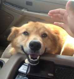 Took a quick break from the roadtrip petting to catch this beautiful smile - Imgur