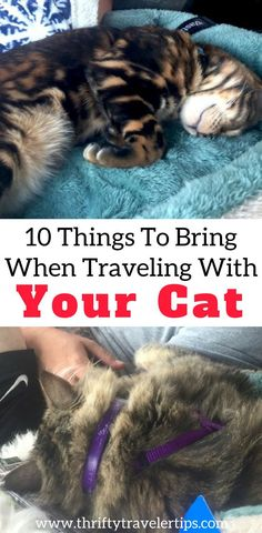 10 Things to Bring When Traveling With Your Cat &; Thrifty Traveler Tips 10 Things to Bring When Traveling With Your Cat &; Thrifty Traveler Tips Shawmarie Mittry Trip If you&;re planning […] life couple road trips Cat Hacks, Pet Travel, Travel Tips, Cat Health, Cat Toys, Van Life, Pet Care, Fur Babies, Your Pet